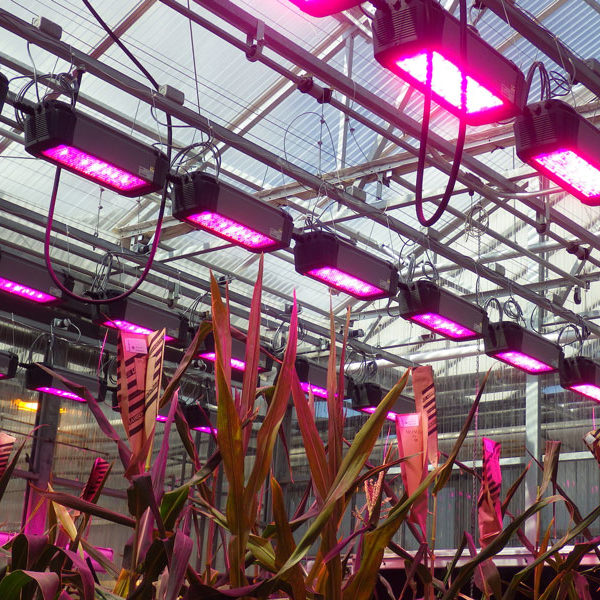 LED_Greenhouse_008
